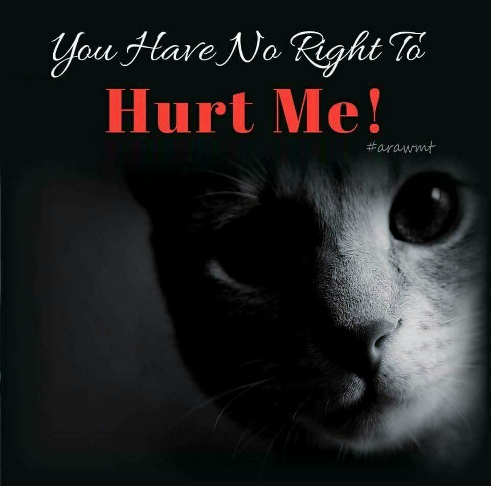 Baby Crying Fight Animal Cruelty Animal Quotes