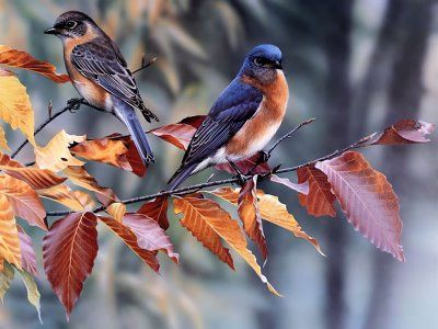 Resultado de imagem para pássaros diversos
