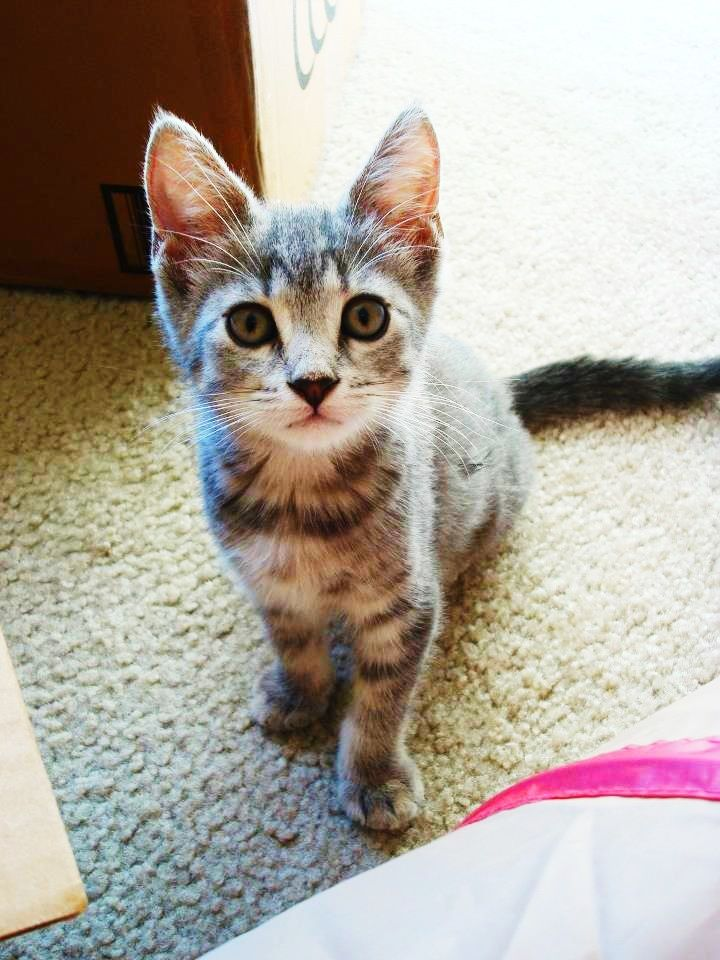 My Cat Chloe When She Was A Kitten We Found Her Abandoned In Front Of My Husband S Office When She Was Just 5 Weeks Old Now She Cute Pictures Cats Kittens