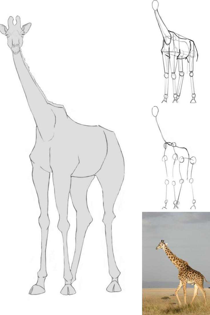 Comment Dessiner Une Girafe Comment Dessiner Une Girafe Girafe Dessin Comment Dessiner