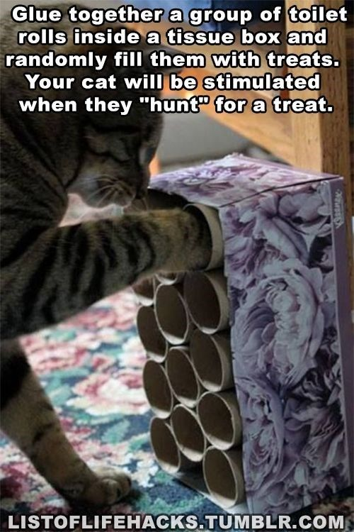 11 Clever Hacks Any Pet Owner Should Know Diy Cat Toys Cat Hacks Cat Diy