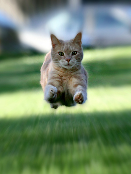 A Great Example Of The Zoom Effect Digital Photography School Crazy Cats Cats Cute Animals