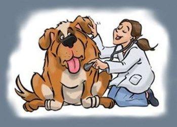 Pin En Efemerides De Animales Y Mascotas