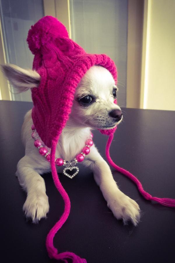 Worthy Dog Toboggan Dog Hat - Pink  4bcc062839a