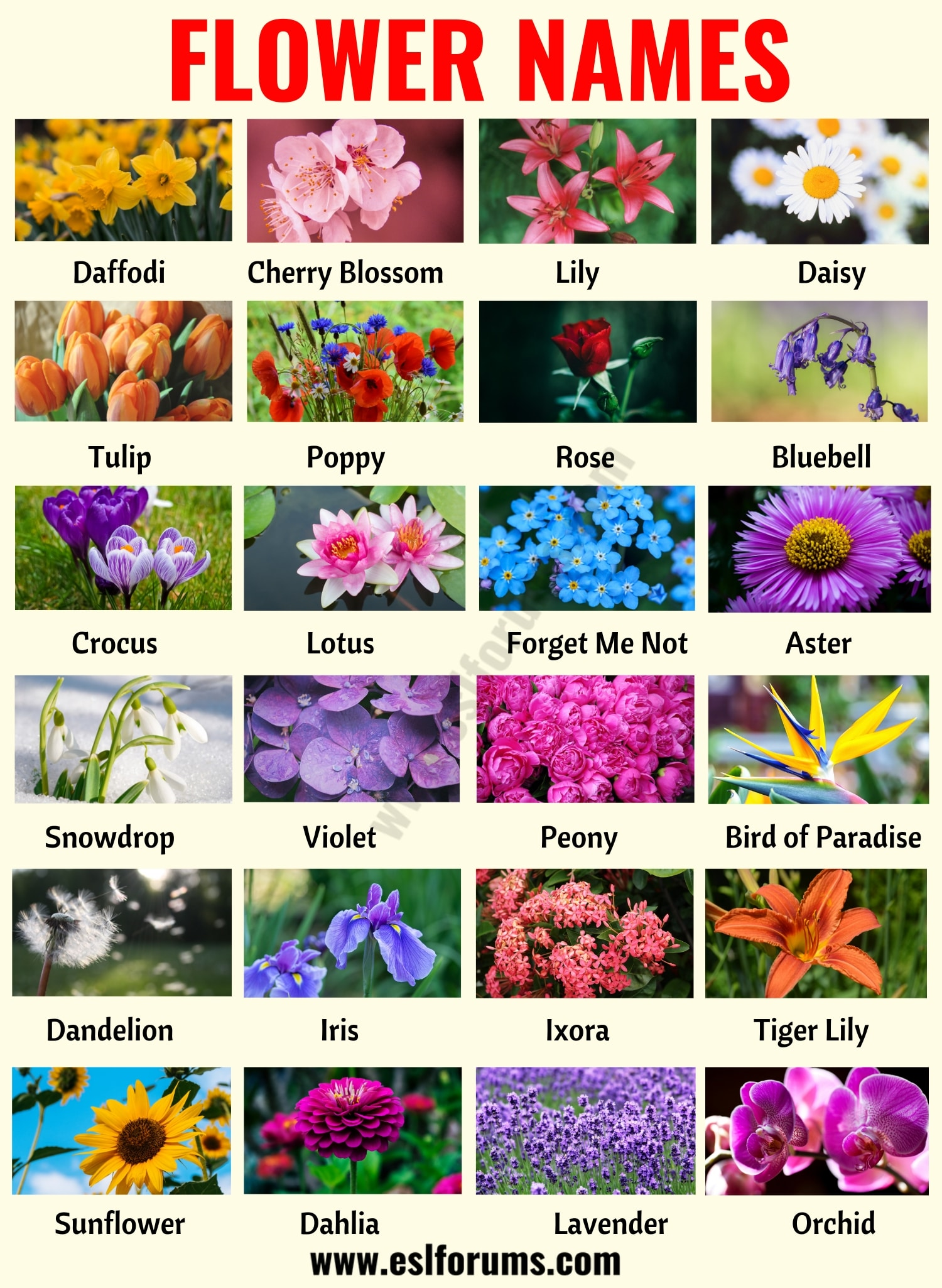 Flower Names List Of 25 Popular Names Of Flowers With The Pictures Esl Forums Flower Names List Of Flowers Flowers Name List