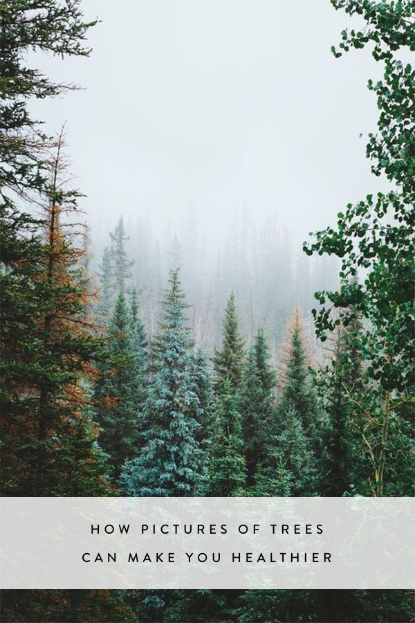 So, the Key to Health Is Trees--but Not Necessarily Real Ones  via @PureWow