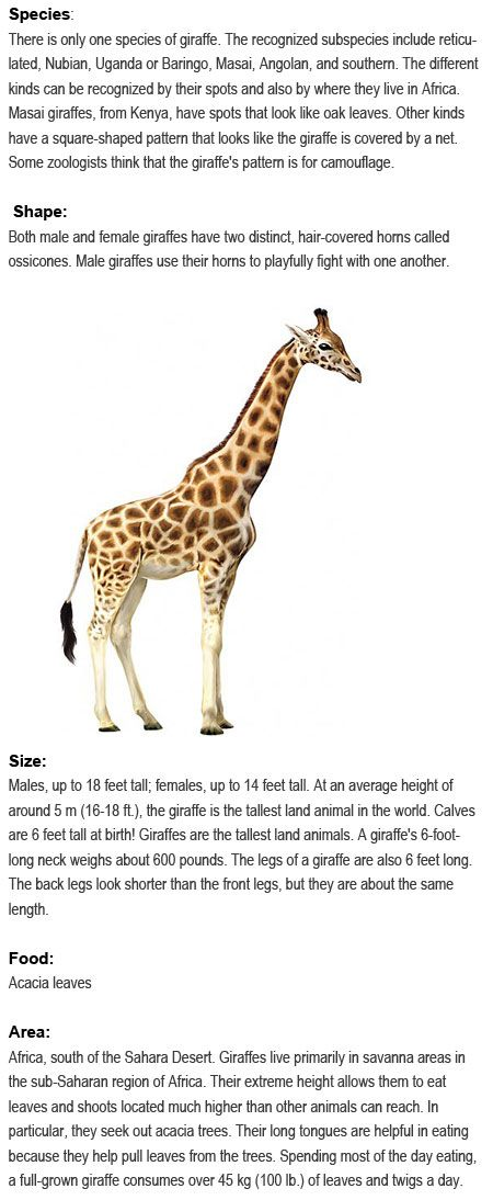 Facts about Giraffes for kids http://firstchildhoodeducation ...