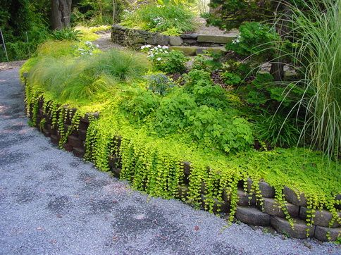 Retaining Wall Planting Ideas