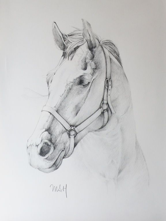cabeza de caballo … | imagines | Pinte…