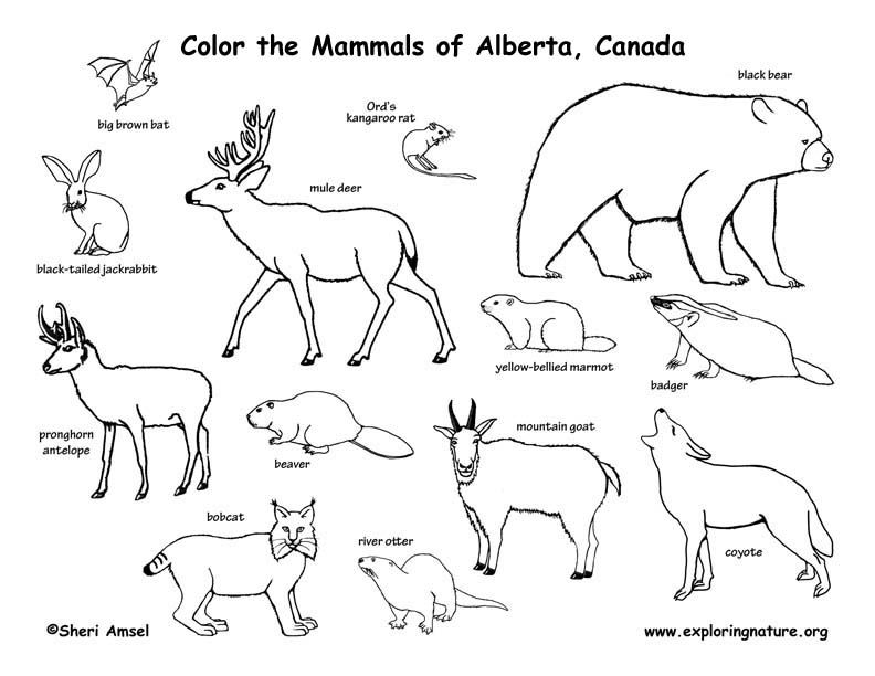 1553-biomes-colouring-pages.jpg (792×612) | Ideas for classroom ...