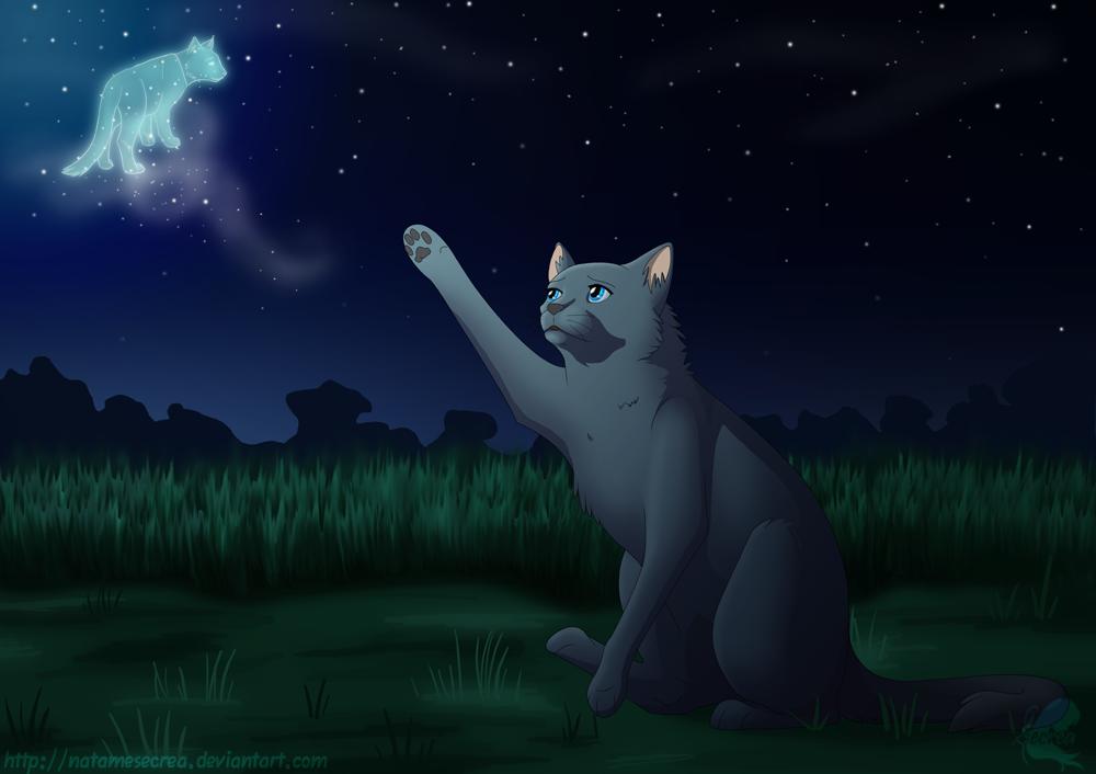 Výsledek obrázku pro warriors cats cinderpelt
