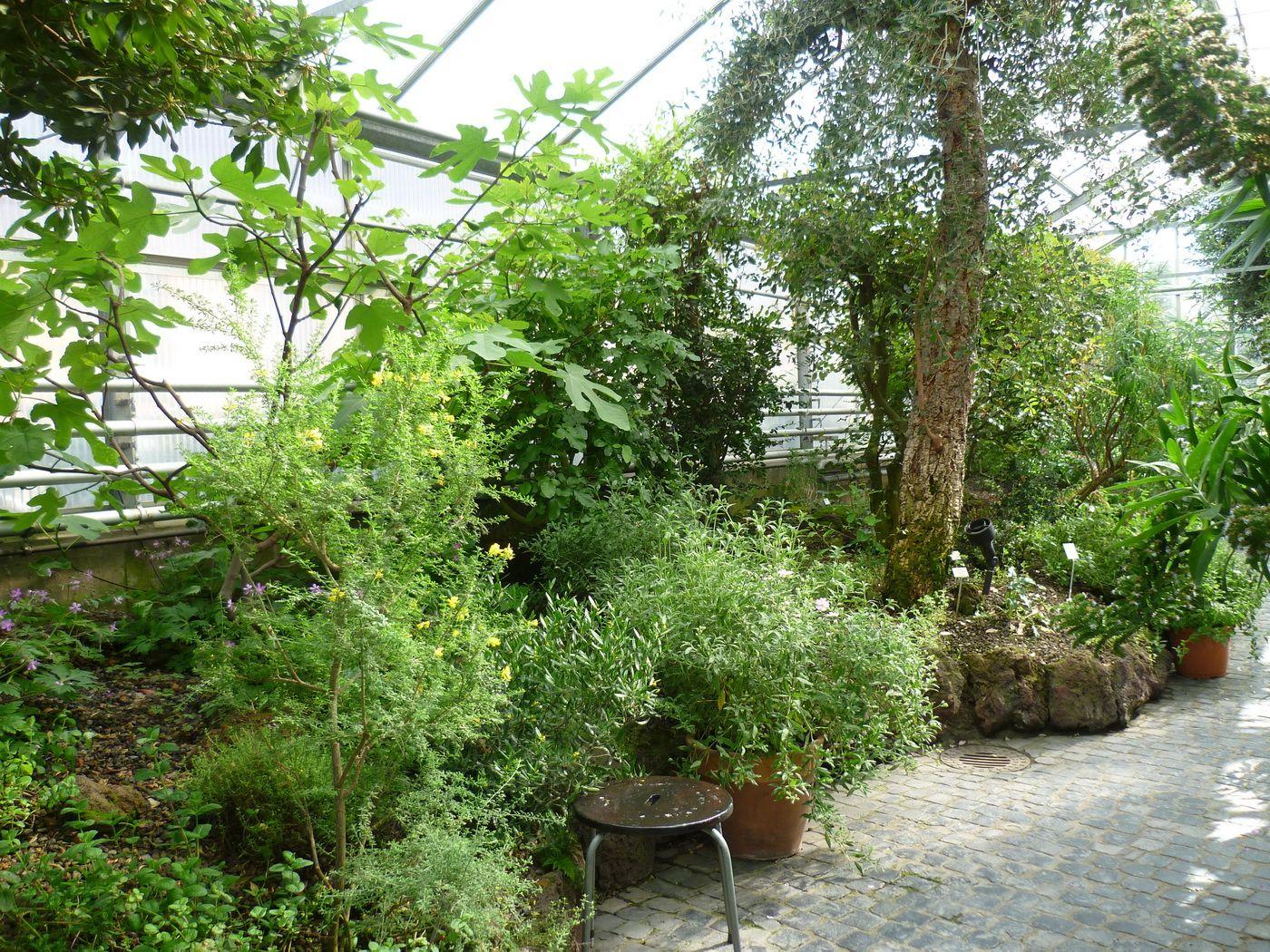 Herrenhauser Garten Hannover Berggarten Garten Hannover Herrenhauser Garten Botanischer Garten