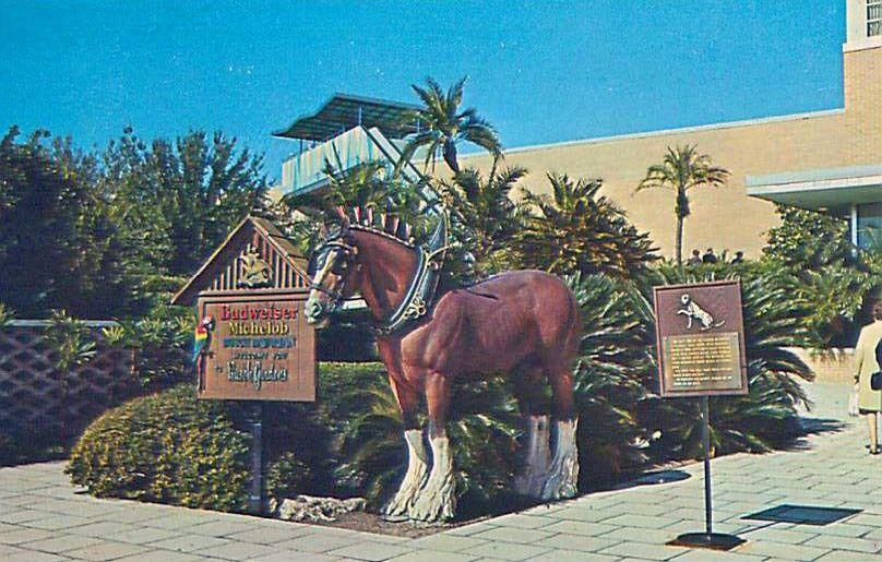 6f6cd85a1783cb7062ff65edcd4f3f24 - Motels Near Busch Gardens Tampa Bay