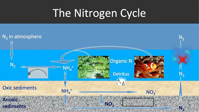 Log Into Your Edx Account Edx Nitrogen Cycle Nutrient Cycle Vascular Plant