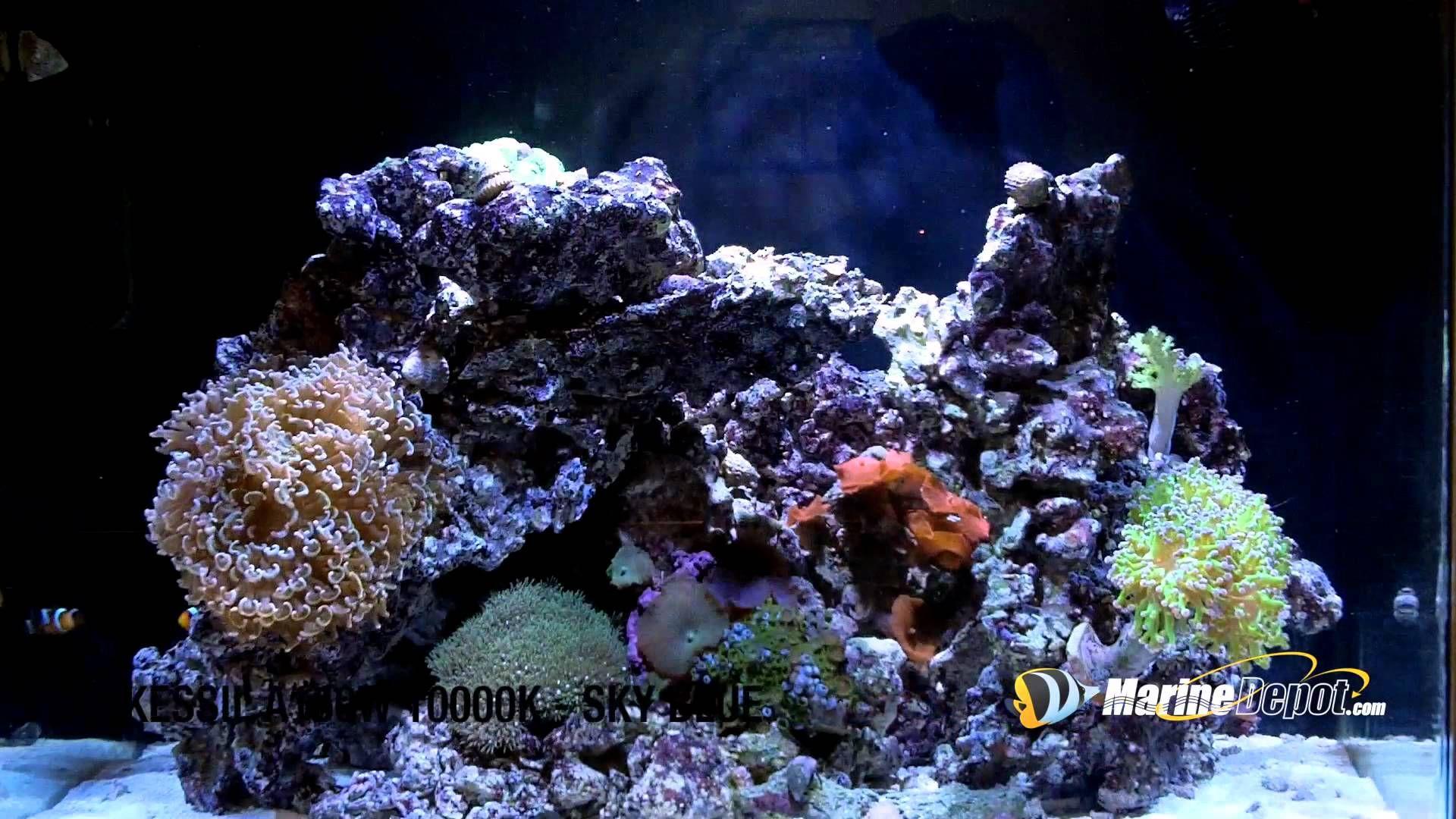 kessil a150w special blend led aquarium light product demo marine