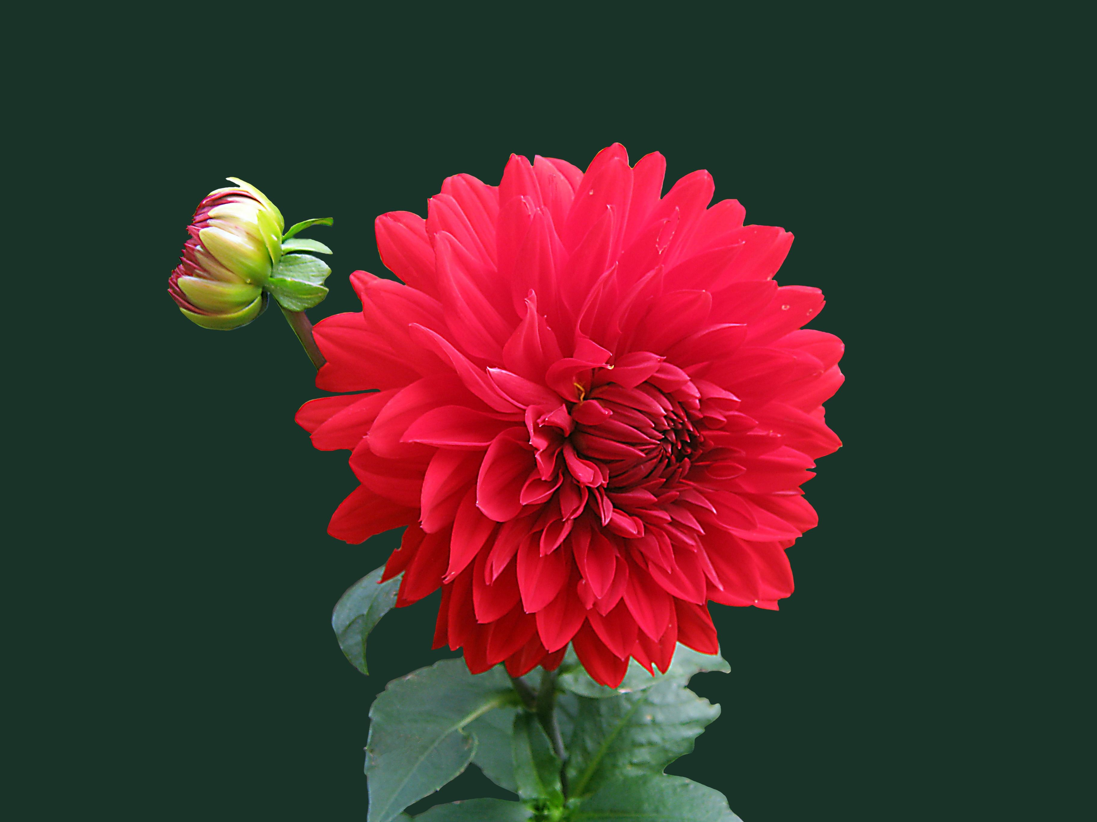 Single Post Flower Wallpaper Red Flower Wallpaper Beautiful