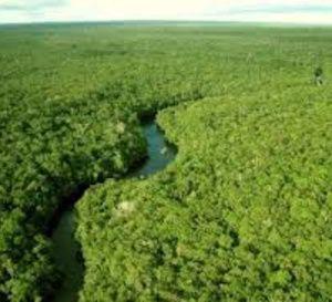 Le biologiste George Schaller s'inquiète pour une Amazonie en danger