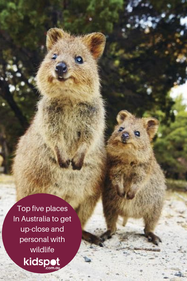 Top Five Places In Australia To Get Up-close And Personal