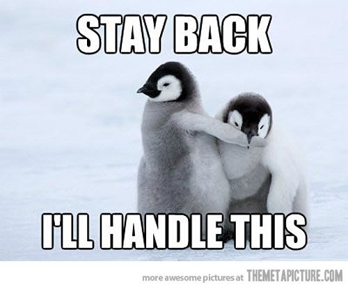 Have A Laugh Baby Penguin Takes Charge Cute Penguins Baby