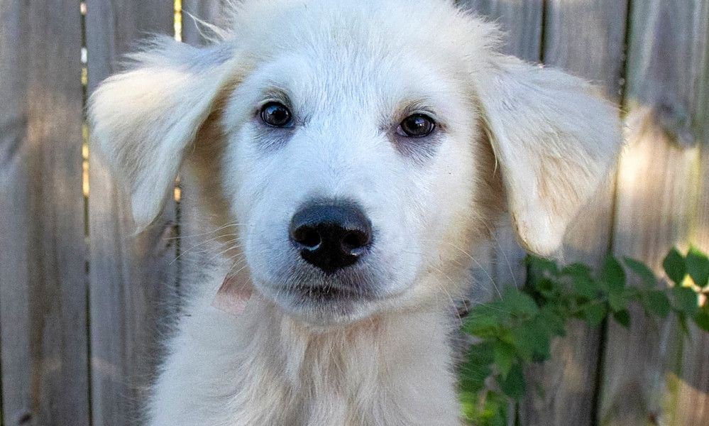 See listings of puppies up for adoption at pet adoption