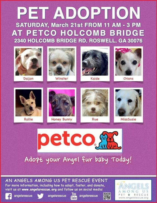Pin By Angels Among Us Pet Rescue On All About Aau Petco Pet Adoption Adoption