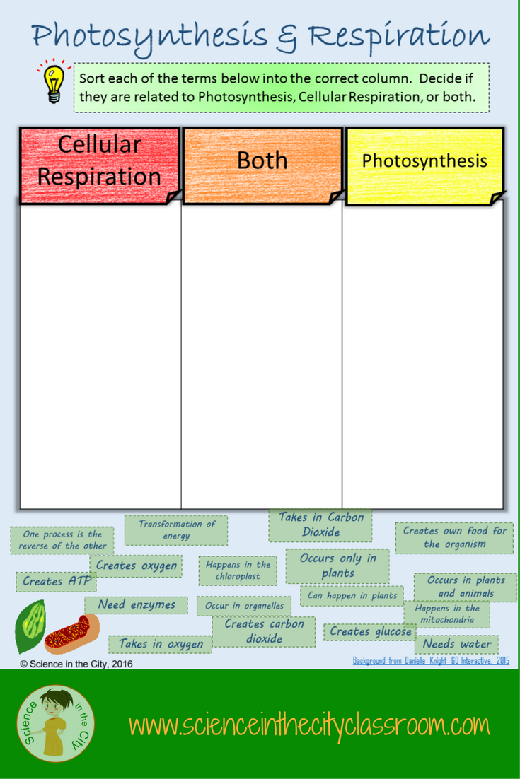 How To Clarify Photosynthesis Cellular Respiration A Free Foldable Photosynthesis And Cellular Respiration Photosynthesis Photosynthesis Activities [ 1102 x 735 Pixel ]