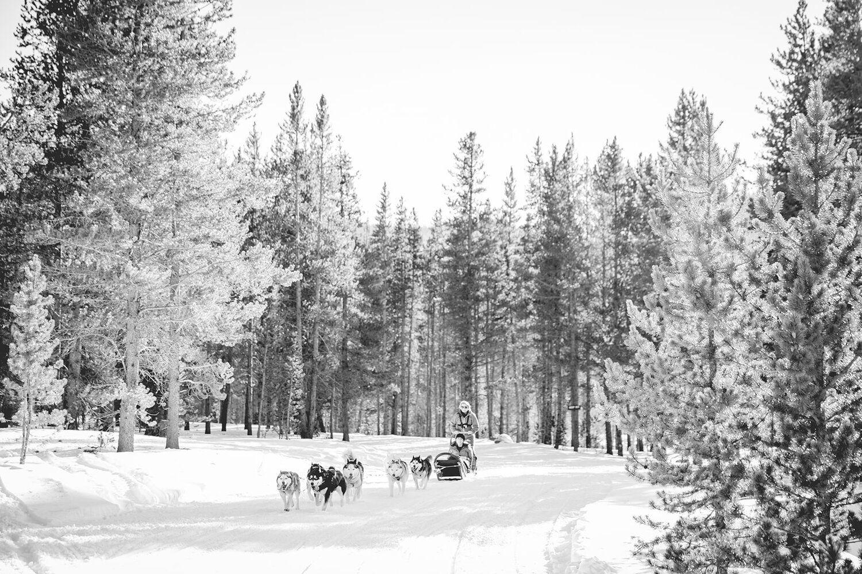 Winter Proposal Ideas in 2020   Colorado winter wedding ...