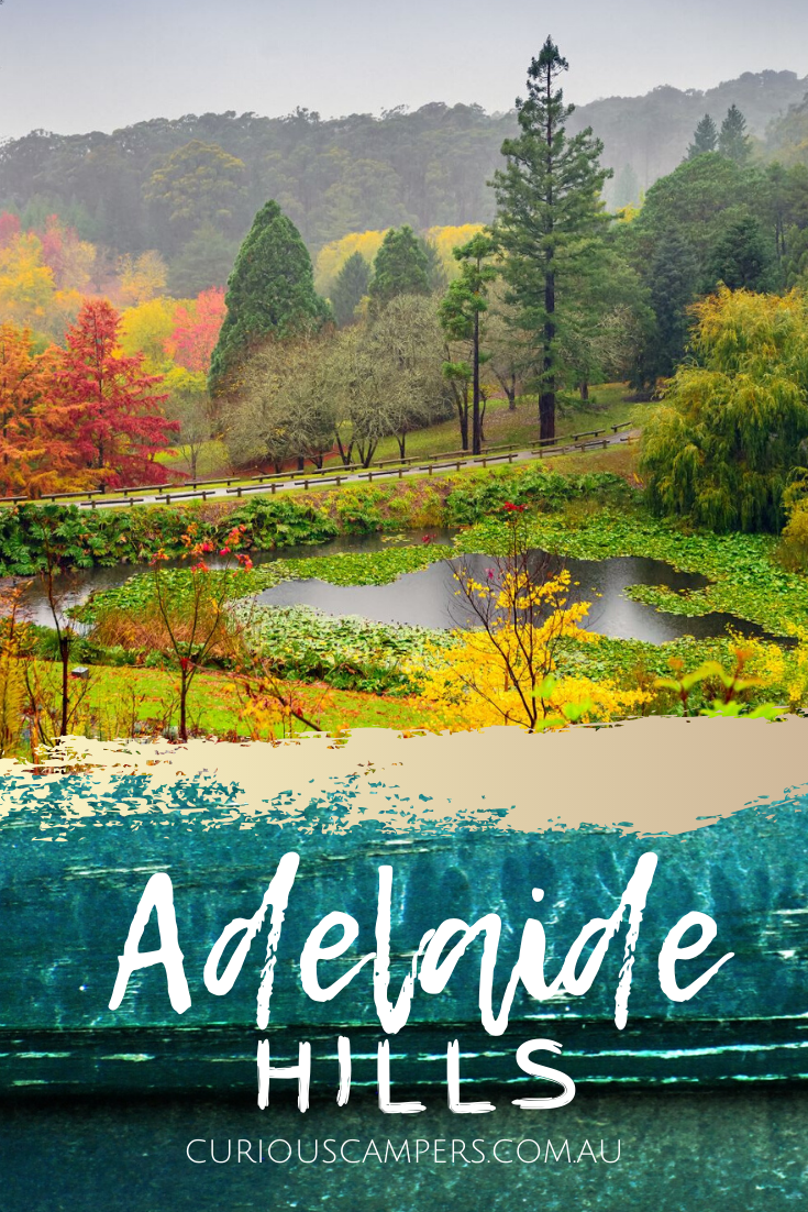 There are things to do in the Adelaide Hills that will appeal to all types of travellers. The scenery, wildlife, and family friendly activities are the perfect mix of fun and relaxation. Although only 20 minutes from the city, the Adelaide Hills might as well be another world away. #australia #southaustralia #adelaidehills #wildlife #australianwildlife #wineries
