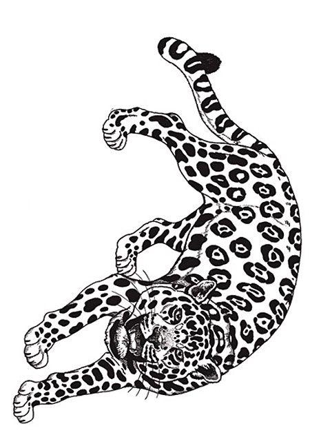 Umbrella Coloring Jaguar Rainforest Jaguar Drawings