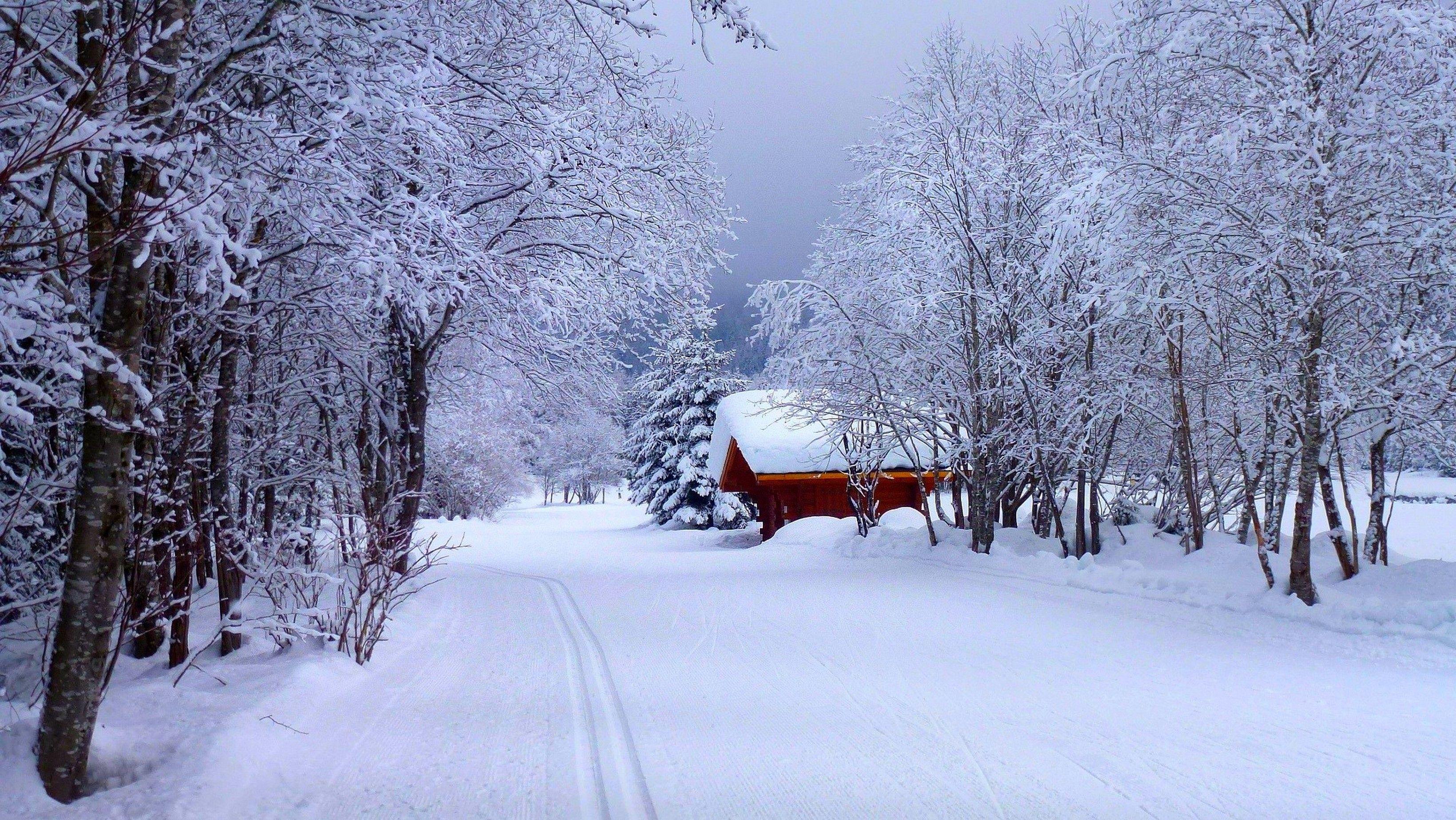 Papel De Parede Natureza, Casa, Floresta, Neve, Neve