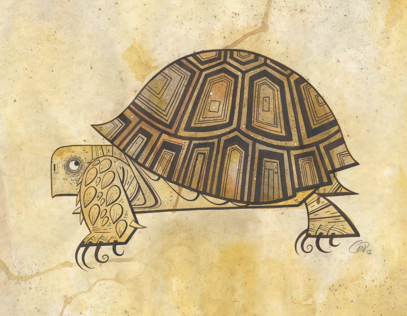 tortoise drawing for pinterest - photo #3
