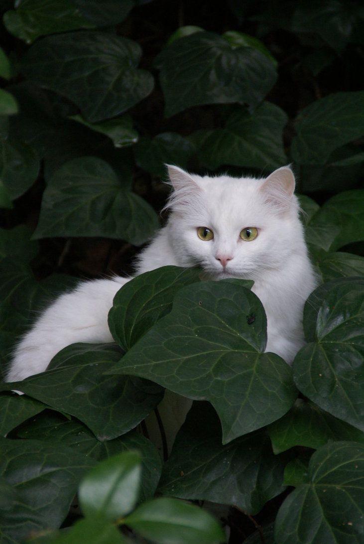 gato na folhagem