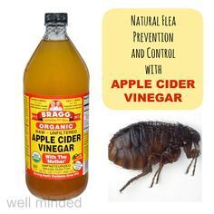 using apple cider vinegar for natural flea prevention and control — well minded pets