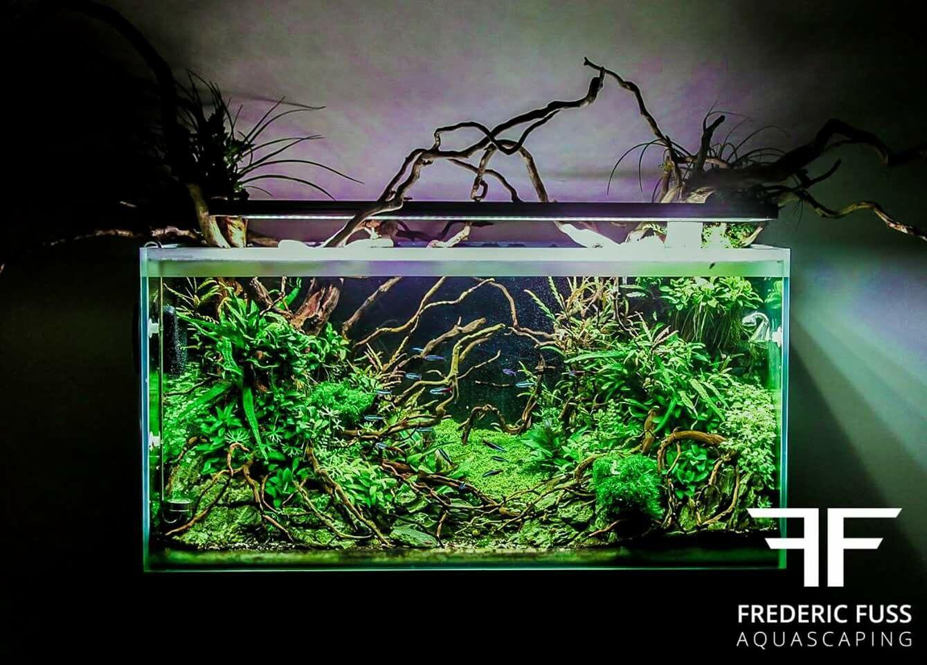 By frederic fuss aquarium and fish pinterest aquariums