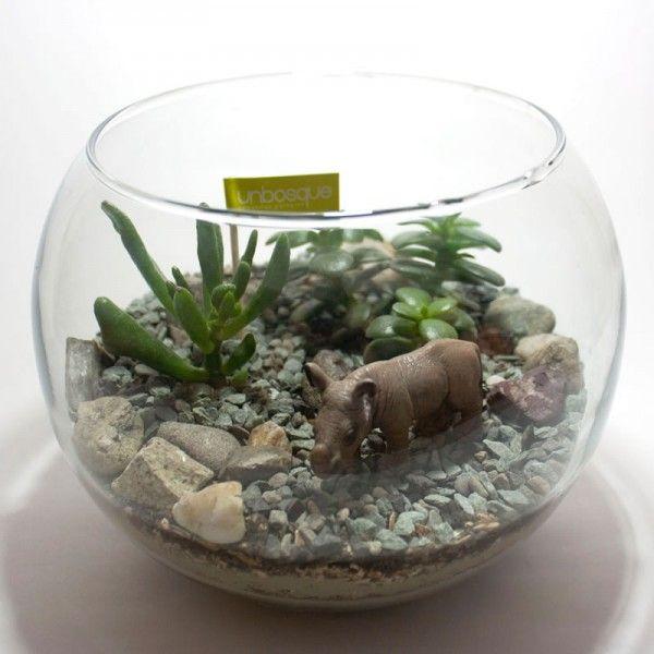 Terrari plantes i flors plants pinterest terrario - Como transplantar cactus ...