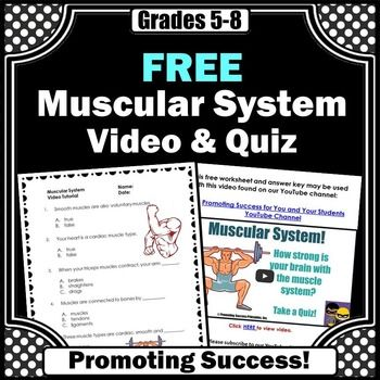 muscular system here is a free muscular system worksheet or quiz and answer key to go along. Black Bedroom Furniture Sets. Home Design Ideas