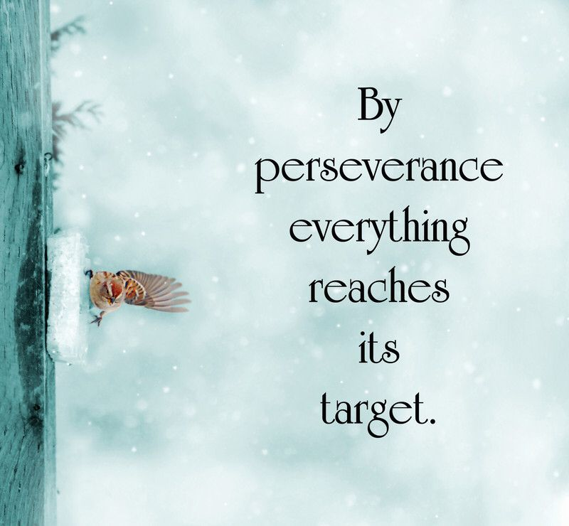 Inspirational Quotes About Perseverance: By Perseverance Everything Reaches Its Target