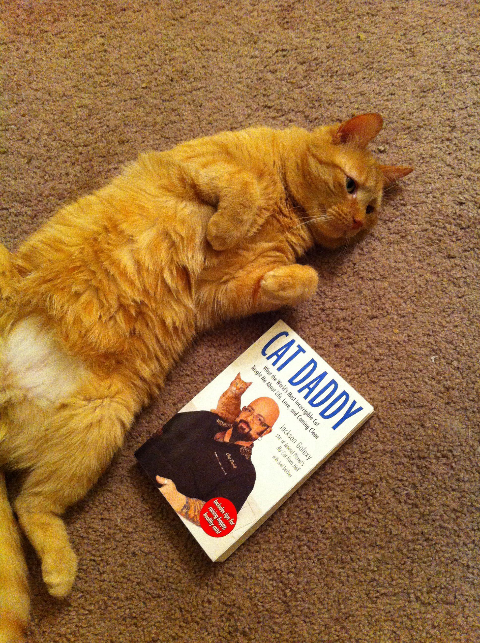 Weekend Reading Jackson Galaxy Daddy Kitty