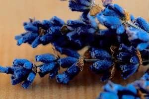 Vyhýbáte-li se v boji proti nežádoucímu hmyzu na zahradě nebo ve vašich domovech chemii, mohou vám pomoci samotné rostliny. Nechte se inspirovat několika tipy k odpuzení malých potvůrek.Ros