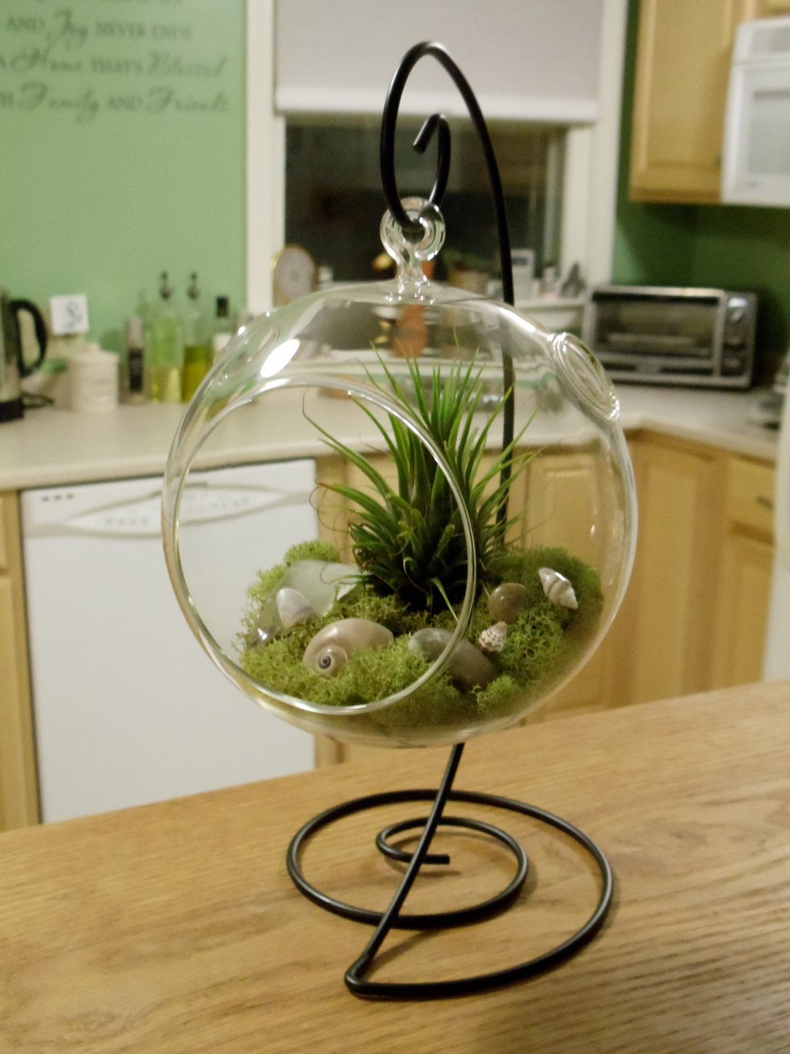 Air Plants Air Plant Terrarium With Decorative Stand By