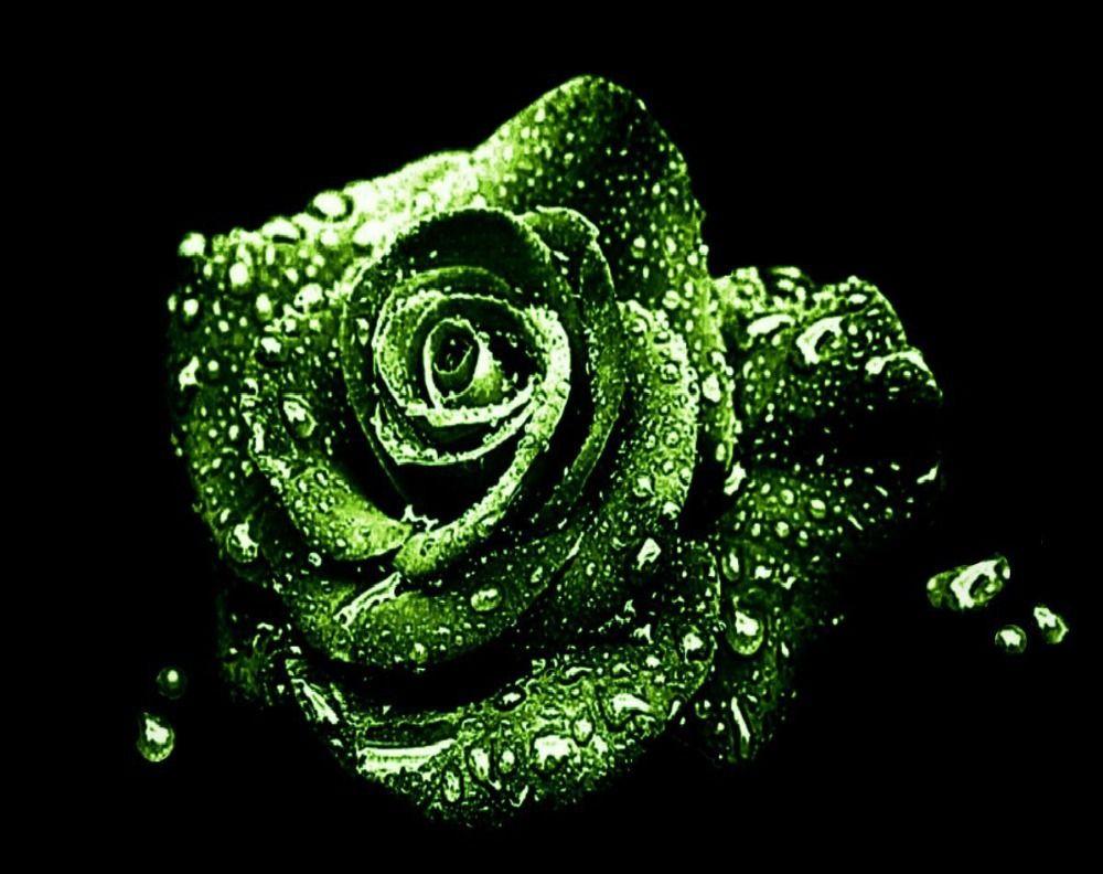 зеленые розы картинки каплями комиксы потрясные тролль