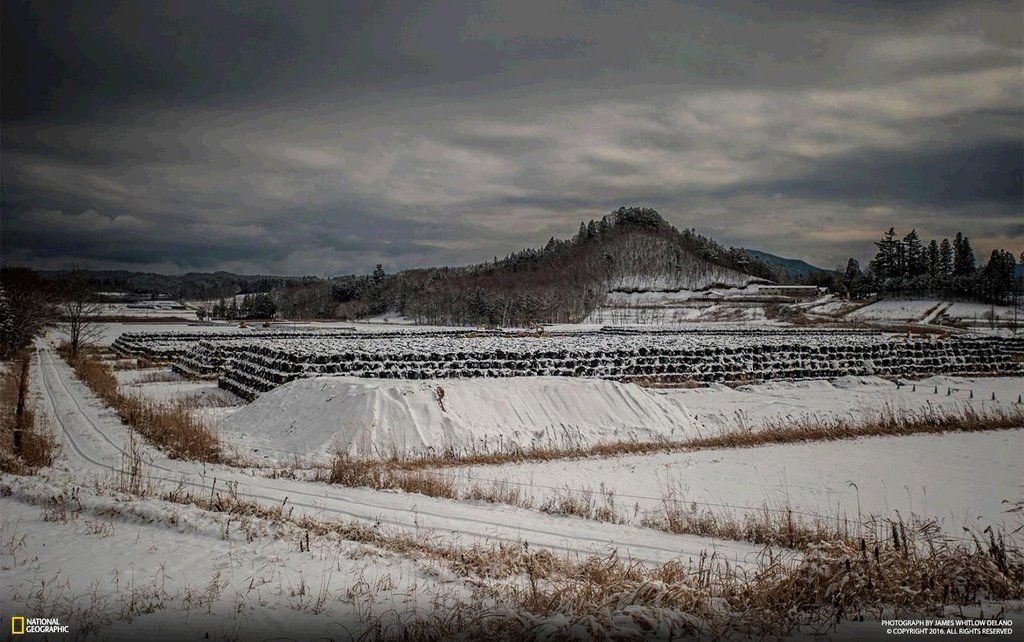 [ARTICLE] @NatGeoPhotos : Five years after nuclear meltdown see what remains of once fertile landscape of #Fukushima: https://t.co/mBzwyA7oeT https://t.co/tg1QbzsU3f