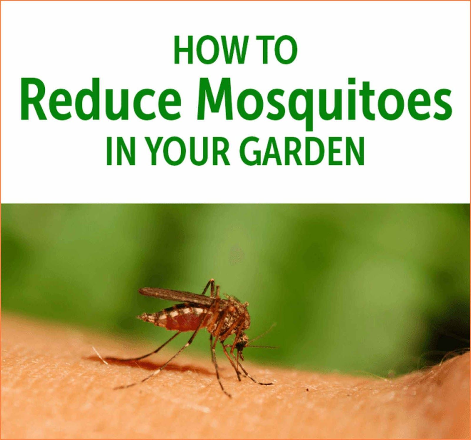 +74 How To Rid Backyard Of Mosquitoes | Home Decor