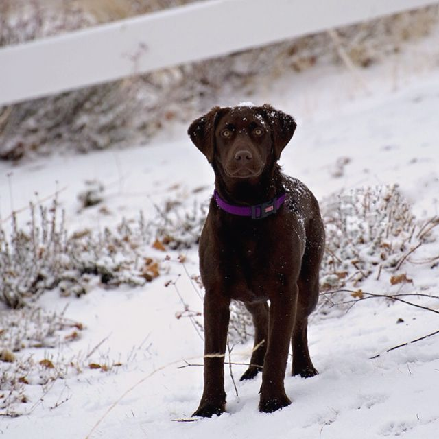 My coco in the snow