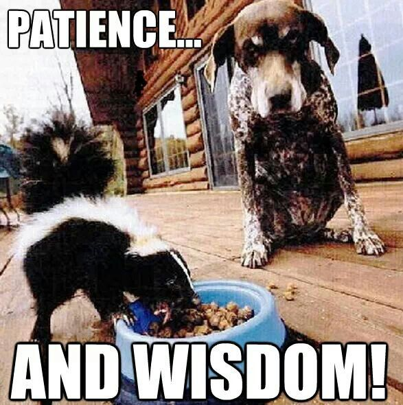 Funny Meme About Patience