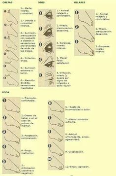 Image result for equine body language chart also camp horses horse rh pinterest