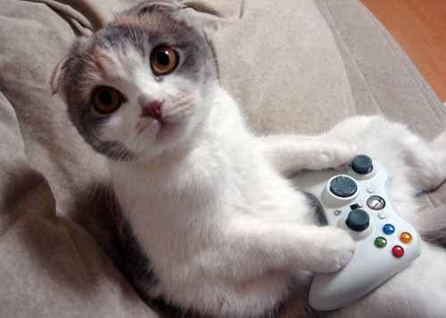 Häufig photo de chat trop drôle | Ajouter cette photo à votre site ou à  PT03