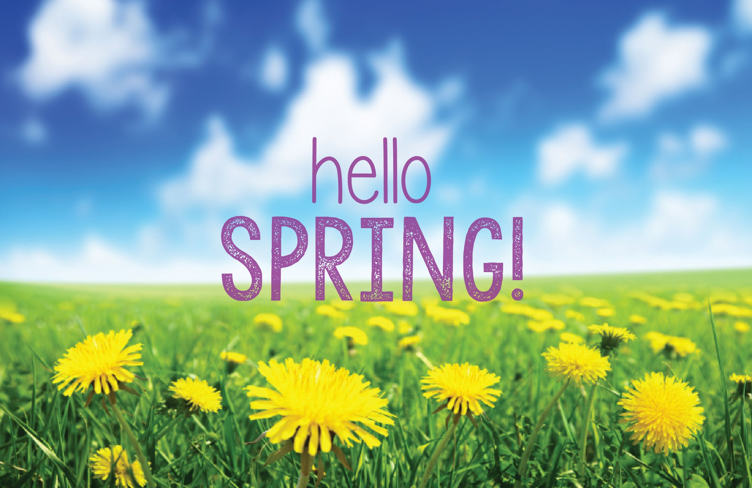 Happy First Day Of Spring Spring Sign Hello Spring Spring Has Sprung