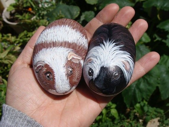 Adorable little Guinea Pigs painted on Rocks