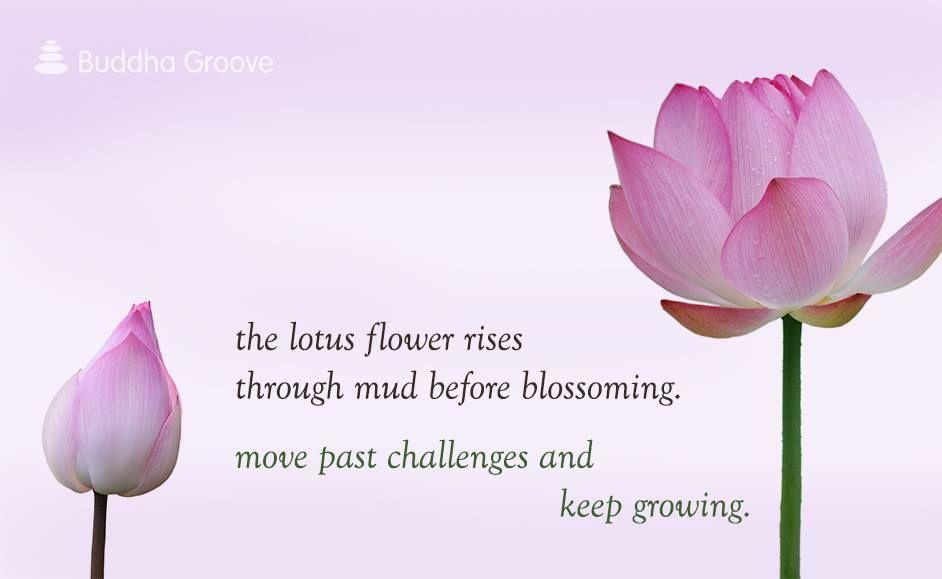 The lotus flower rises through mud before blossoming exactly the lotus flower rises through mud before blossoming mightylinksfo